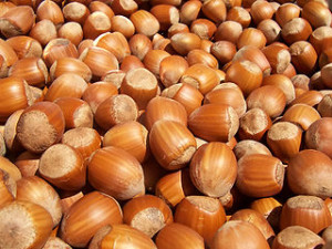 identifying hazelnuts