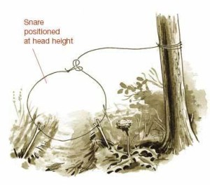 hunting snares